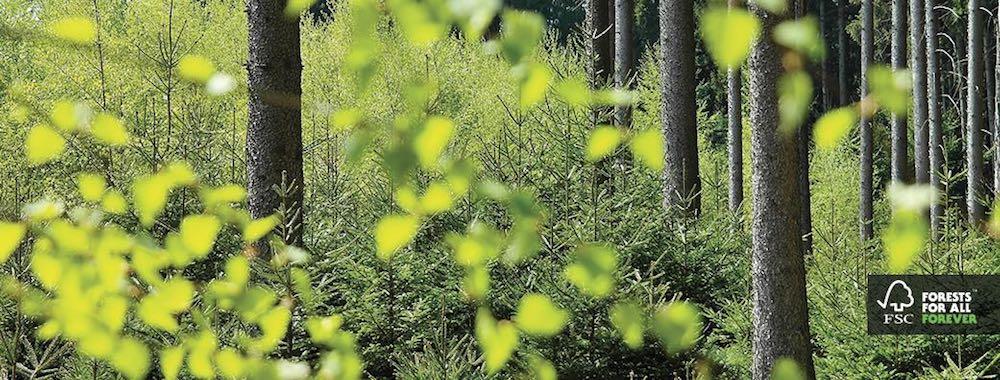FSC-forests-for-all-forever-articolo-di-approfondimento-su-azienda-VG7-Vanina-Basilli-copywriter